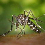 Moskitonetz Einzelbett zur Mückenabwehr und als wunderschöner Baldachin