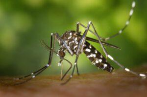 moskitonetz einzelbett